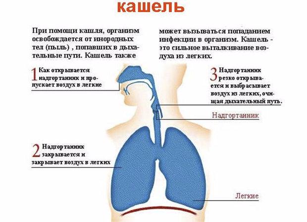 От чего сухой кашель у детей в домашних условиях 19
