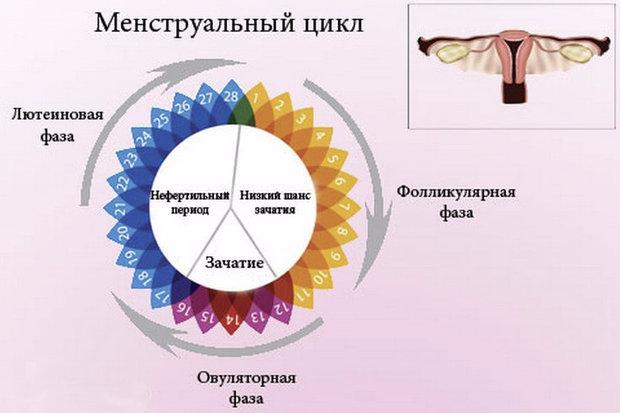 Больно во время секса 2 фаза цикла
