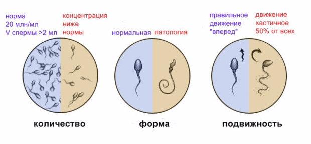 kak-uvilichit-podvizhnost-spermotozoidov