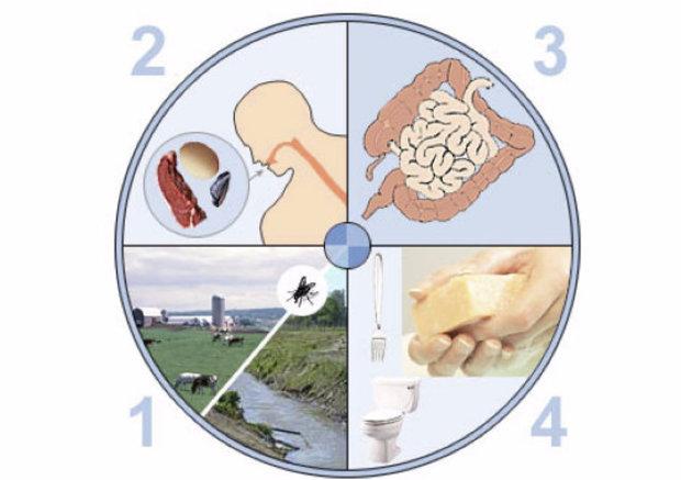 Острый (инфекционный) гастроэнтерит у детей: симптомы и лечение