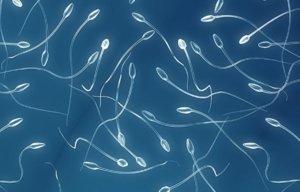 Сколько сантиметров сперматозоид фото