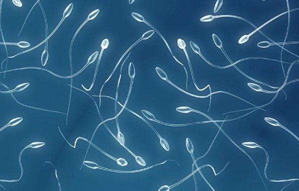 Сколько живут сперматозоиды в разных средах (воздухе, воде, матке)