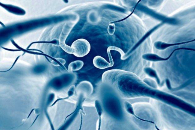 Продолжительность жизни сперматозоидов вне яйцеклетки