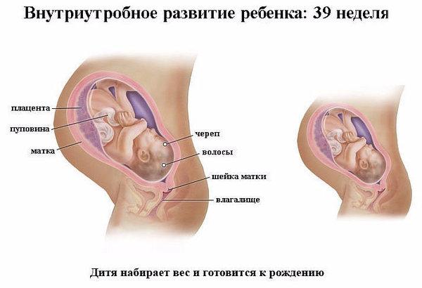 17 неделя беременности что происходит с малышом колесо