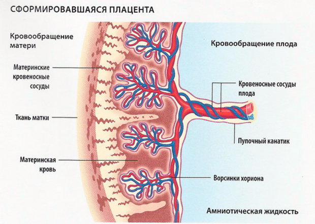 Плацентарная недостаточность