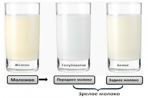 Цвет грудного молока